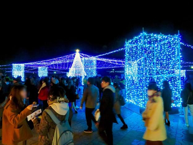 名古屋港ガーデンふ頭:臨港緑園のクリスマスイルミネーション 2018 No - 1