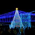 Photos: 名古屋港ガーデンふ頭:臨港緑園のクリスマスイルミネーション 2018 No - 2