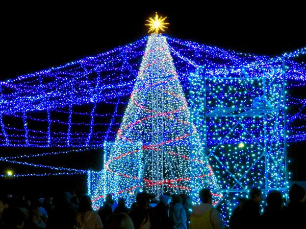 名古屋港ガーデンふ頭:臨港緑園のクリスマスイルミネーション 2018 No - 3