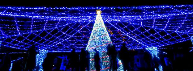 名古屋港ガーデンふ頭:臨港緑園のクリスマスイルミネーション 2018 No - 10