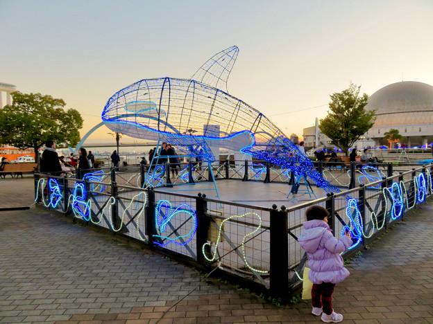 名古屋港ガーデンふ頭:JETTY前のクリスマスイルミネーション(シャチ)
