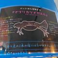 名古屋港水族館「へんカワ展」No - 26:アフリカツメガエル(説明)
