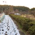 まだ雪が残っていた定光寺公園沿いの歩道 - 1
