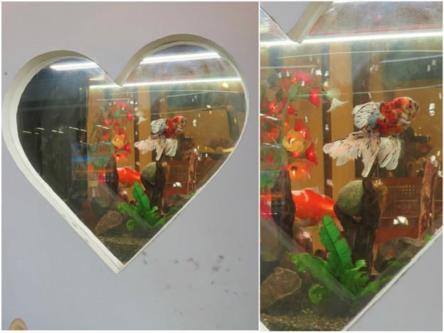 犬山城下町:ハート型の水槽を兼ねた窓 - 3