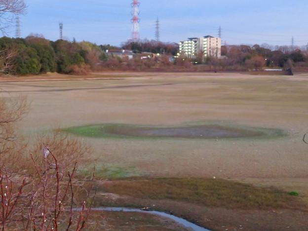 水抜き中の冬の大池 - 3