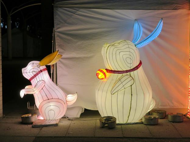 名古屋中国春節祭 2019(夜間)No - 3
