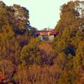 Photos: 真下から見上げた尾張白山社 - 3