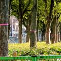 Photos: 再整備工事中で封鎖されてた久屋大通公園(2019年1月27日) - 11