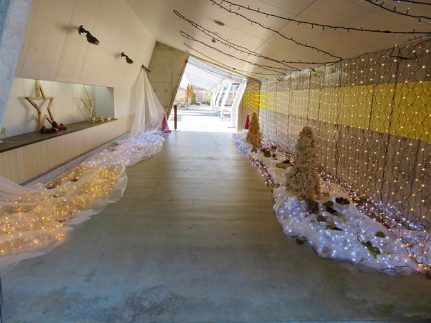 花フェスタ記念公園:花のミュージアム - 25
