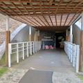 Photos: 花フェスタ記念公園:トンネルギャラリー「トンネル・イルミネーション 2019」 - 1
