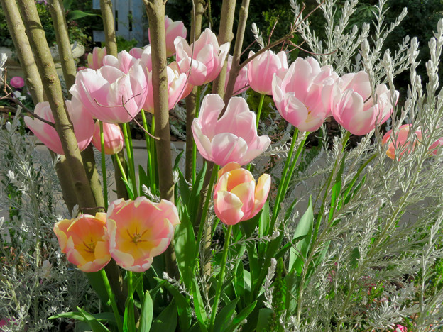 花フェスタ記念公園:花の地球館 - 23(大温室)