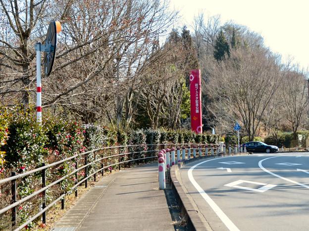 オフシーズン(2月)の花フェスタ記念公園 - 1
