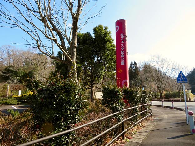 オフシーズン(2月)の花フェスタ記念公園 - 2
