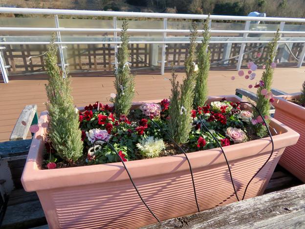 オフシーズン(2月)の花フェスタ記念公園 - 65:バラのベルベデーレ(展望デッキ)