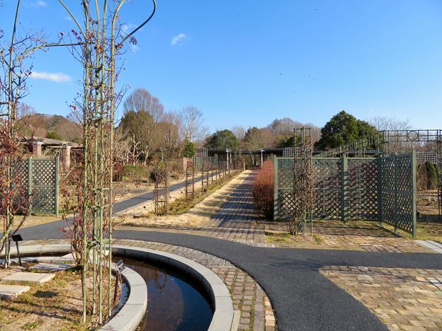 オフシーズン(2月)の花フェスタ記念公園 - 70:ロイヤルローズガーデン