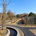 Photos: オフシーズン(2月)の花フェスタ記念公園 - 70:ロイヤルローズガーデン