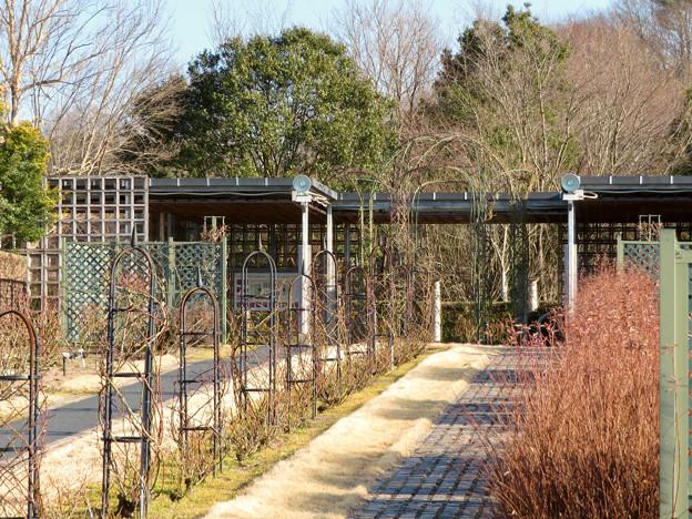 オフシーズン(2月)の花フェスタ記念公園 - 71:ロイヤルローズガーデン
