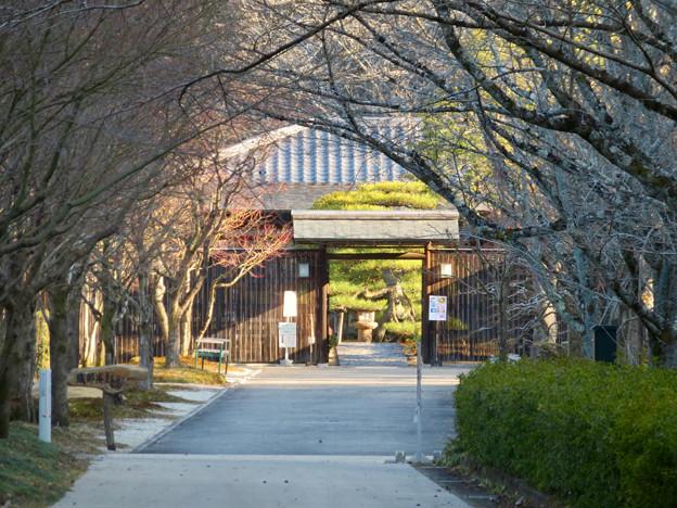 オフシーズン(2月)の花フェスタ記念公園 - 74:茶室「織部庵」入り口