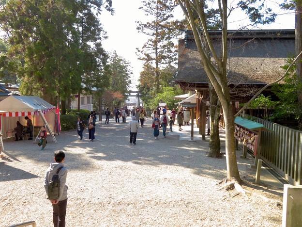梅が満開だった大縣神社 2019 - 12