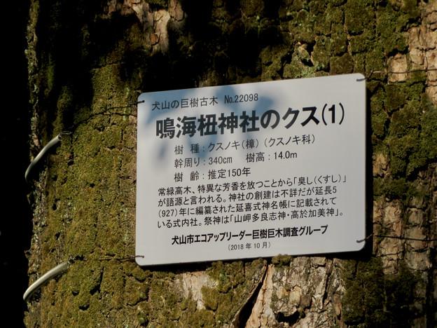 鳴海杻(なるみてがし)神社 - 13:巨大なクスの木
