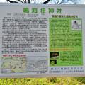 Photos: 鳴海杻(なるみてがし)神社 - 15:解説