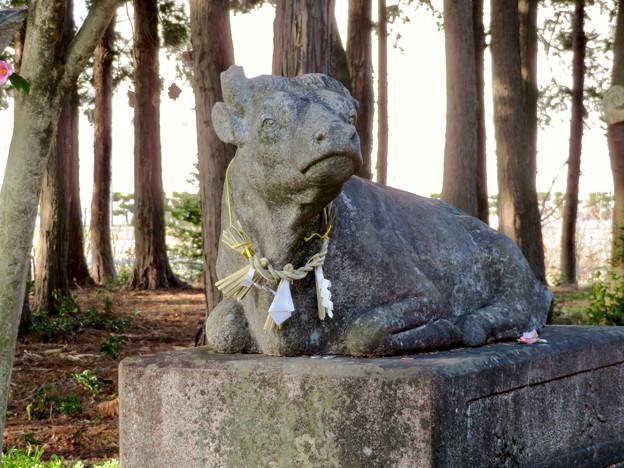 鳴海杻(なるみてがし)神社 - 29:牛の像