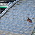 Photos: オアシス21:階段屋根の上に落ちてる服? - 2