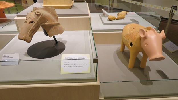 しだみ古墳群ミュージアム「SHIDAMU(しだみゅー)」展示室 No- 43:小幡長塚古墳から出土した馬と猪形の埴輪