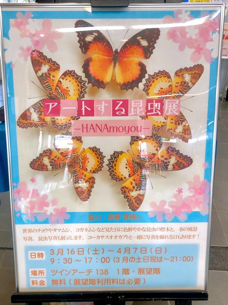 ツインアーチ138:アートする昆虫展 No - 2