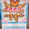 Photos: ツインアーチ138:アートする昆虫展 No - 2