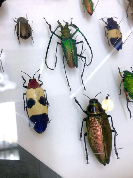ツインアーチ138:アートする昆虫展 No - 7
