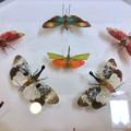 Photos: ツインアーチ138:アートする昆虫展 No - 9(美しい姿をしたテングビワハゴロモ)