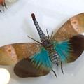 Photos: ツインアーチ138:アートする昆虫展 No - 12(美しい姿をしたテングビワハゴロモ)