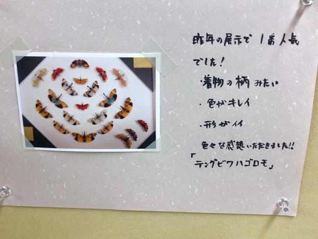 ツインアーチ138:アートする昆虫展 No - 14(美しい姿をしたテングビワハゴロモ)
