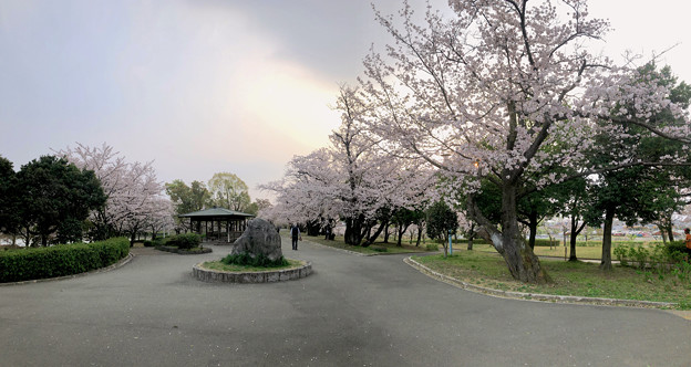 満開だった落合公園の桜(2019年4月7日) - 39:パノラマ