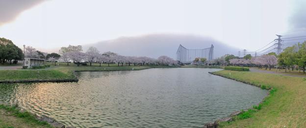 満開だった落合公園の桜(2019年4月7日) - 54:パノラマ