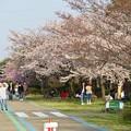 Photos: 138タワーパークの桜 - 1