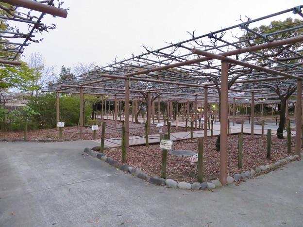 シーズンオフの曼陀羅寺公園 - 7:藤棚