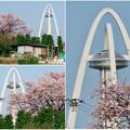Photos: 桜とツインアーチ138 - 8