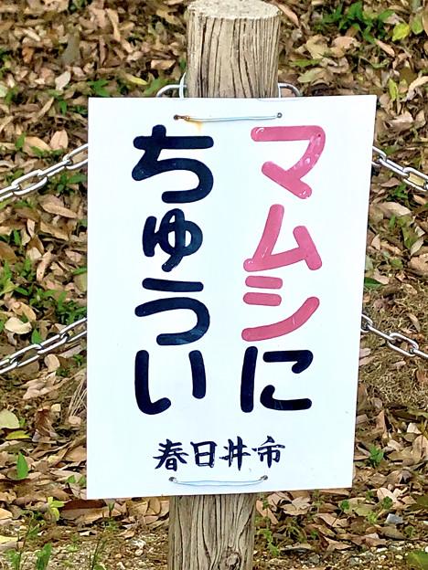 高御堂(たかみどう)古墳 - 11:マムシに注意