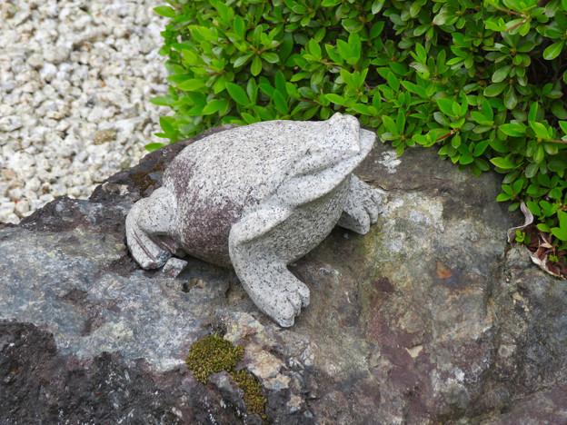 霊鷲院  - 11:石の上のカエル像