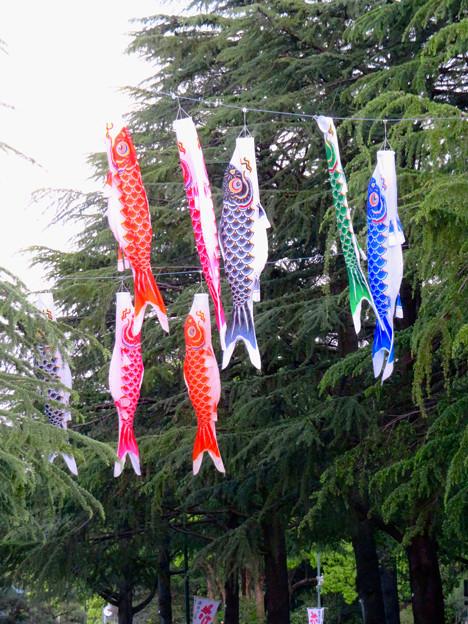 鶴舞公園の鯉のぼり - 3