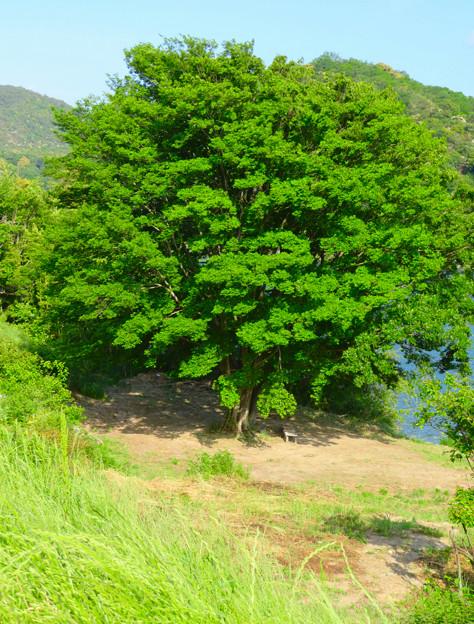 木曽川沿いの絵になる木の立つ場所 - 2