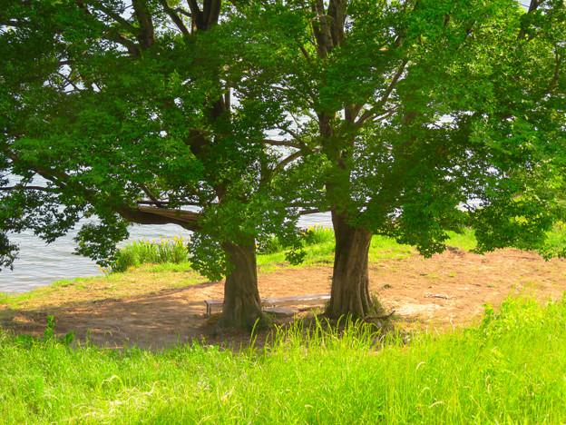 木曽川沿いの絵になる木の立つ場所 - 4