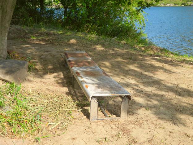 木曽川沿いの絵になる木の立つ場所 - 5:木下のベンチ