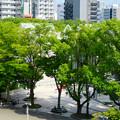 名古屋市科学館から見下ろした名古屋市美術館 - 2