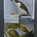 Photos: 名古屋市科学館「絶滅動物研究所」展 No - 31:オオウミガラスの剥製と卵の標本(スミソニアン自然史博物館)