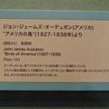Photos: 名古屋市科学館「絶滅動物研究所」展 No - 36:オオウミガラスの絵(説明)