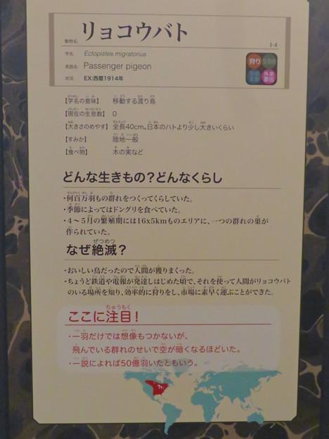 名古屋市科学館「絶滅動物研究所」展 No - 37:リョコウバトの説明