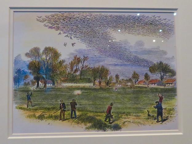 名古屋市科学館「絶滅動物研究所」展 No - 40:空を覆うリョコウバトとそれを狩る人たちが描かれた絵